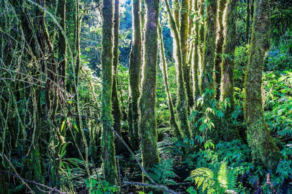 Ingyenes stockfotó dzsungel, erdő, esőerdő témában
