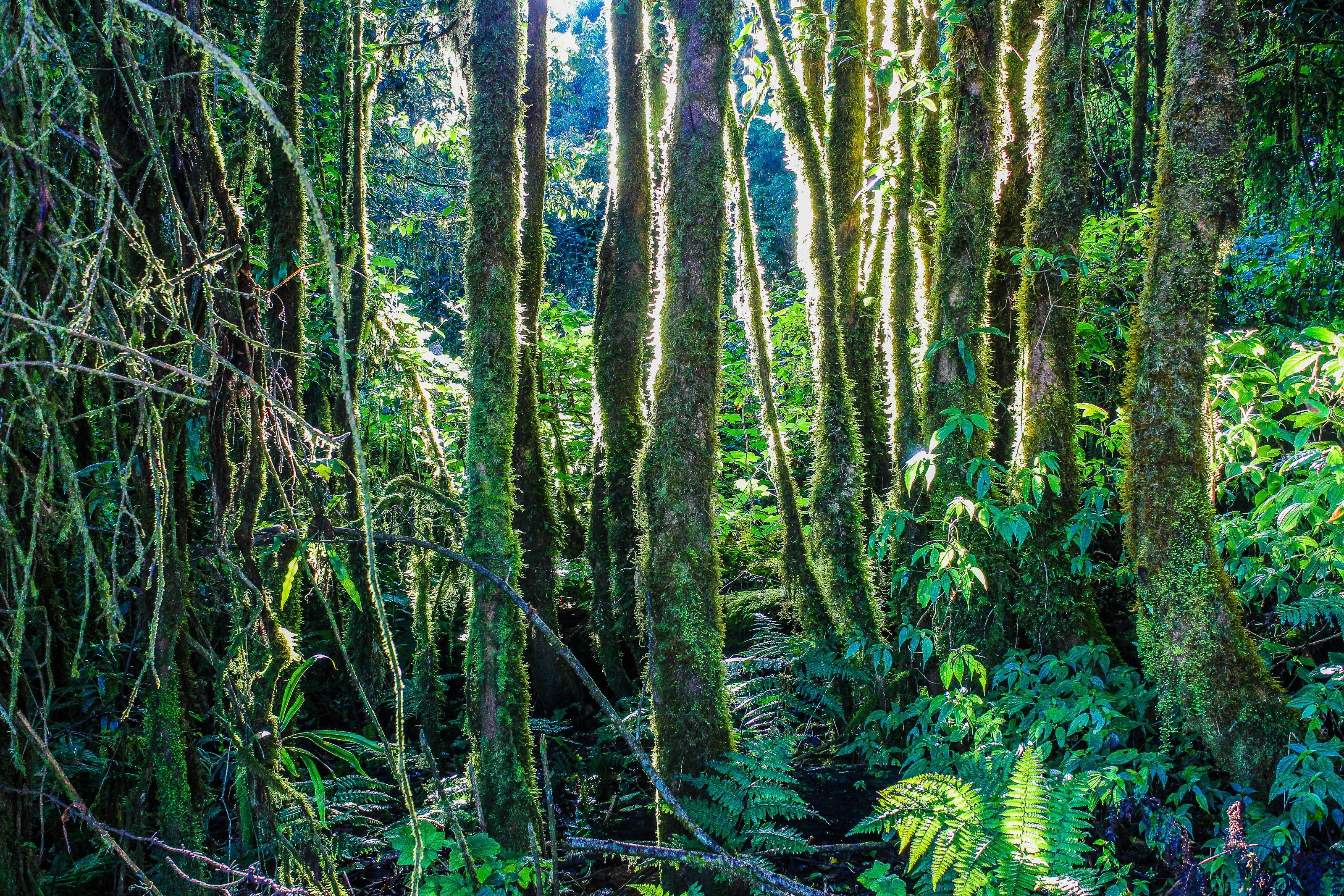 Green Leafed Trees Near Waterfalls 183 Free Stock Photo