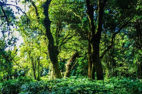 Gratis stockfoto met bomen, Bos, bossen, dag