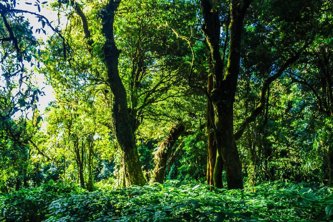 denní, dešťový prales, džungle