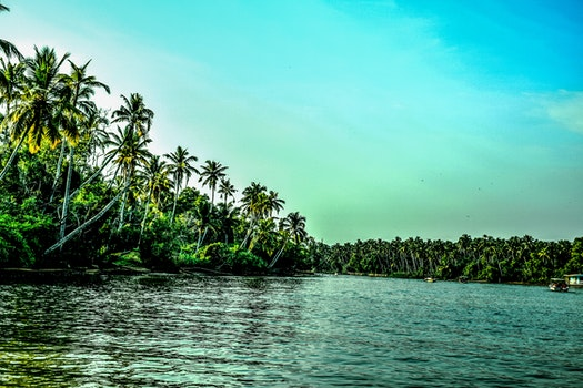 Beach Covered With Coconut Tree Lot