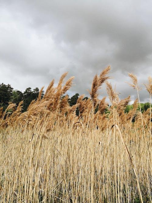 Brown Grass Field Near Green Trees Under Cloudy Sky