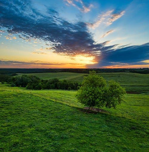 Imagine de stoc gratuită din apus, arbore, câmp