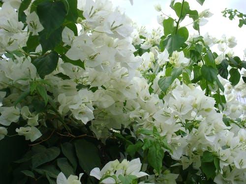Free stock photo of flowers