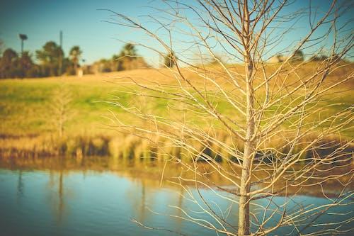 경치가 좋은, 낮, 들판, 물의 무료 스톡 사진