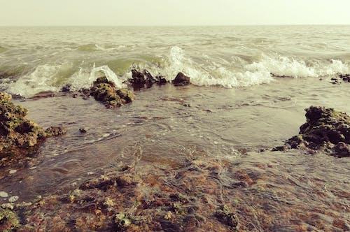 Immagine gratuita di hawksbay, litorale, natura