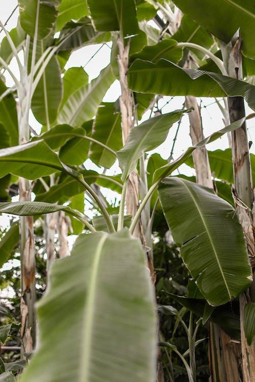 Kostnadsfri bild av anläggning, bakgrund, blomma, botanik