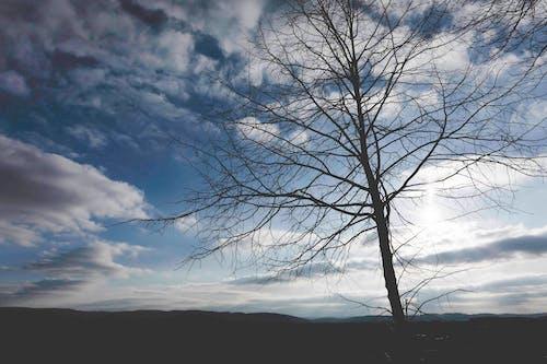 Бесплатное стоковое фото с вечер-небо, голубой, дерево, закат