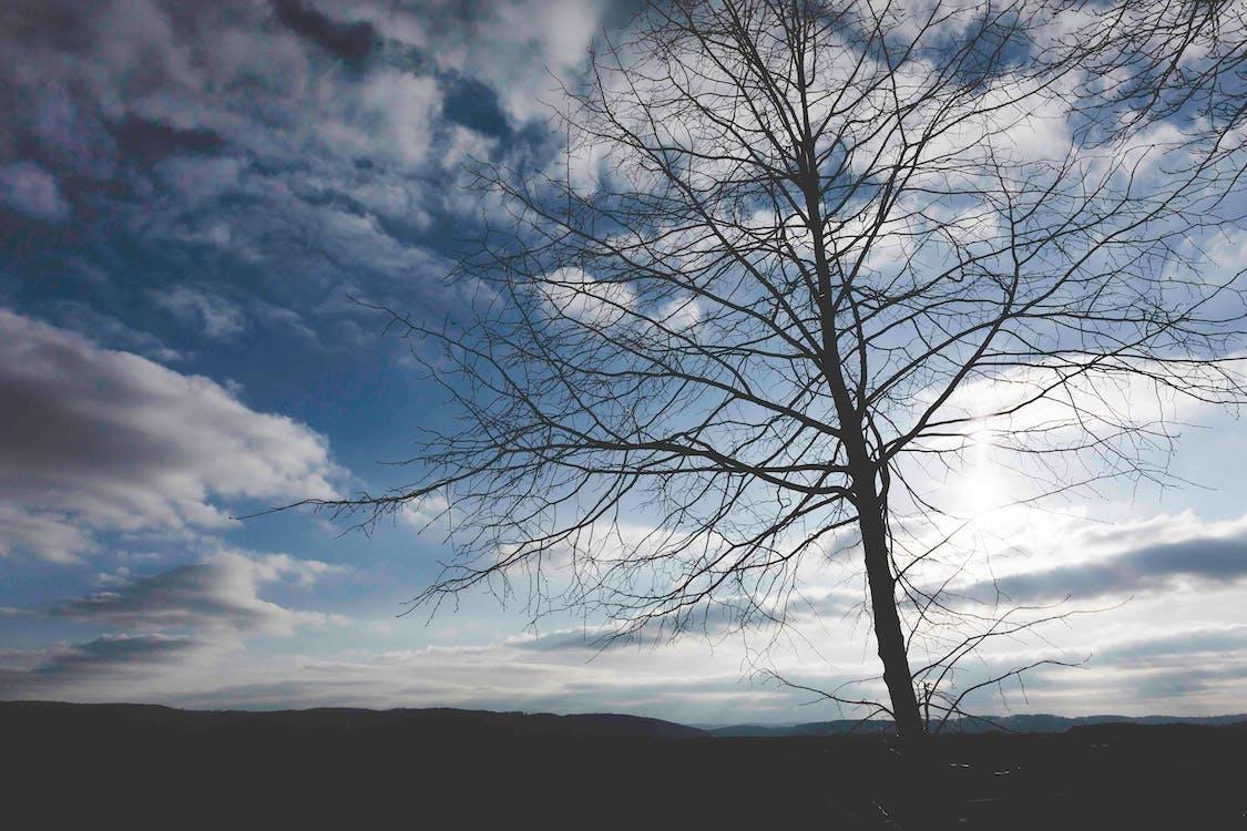 βραδινός ουρανός, δέντρο, δύση του ηλίου