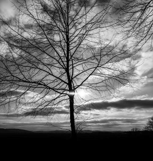 Бесплатное стоковое фото с верхушка дерева, вечер-небо, вечернее солнце, дерево
