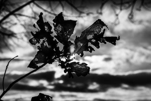 Gratis arkivbilde med bakgrunn, himmel, nærbilde, svart