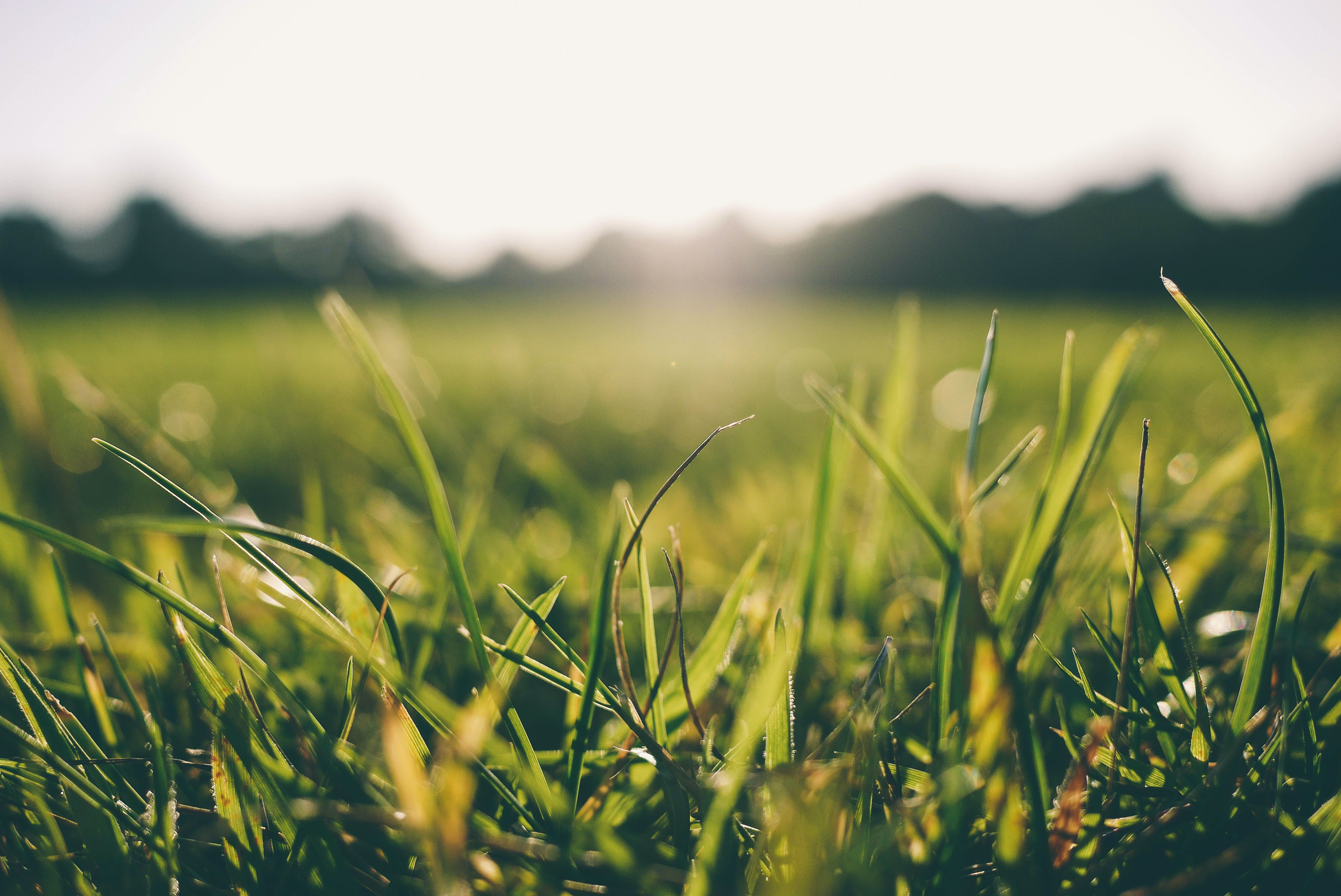 Free stock photo of sunshine, grass, meadow, turf