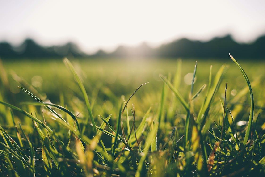 erba, luce del sole, manto erboso
