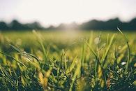 sunshine, grass, meadow