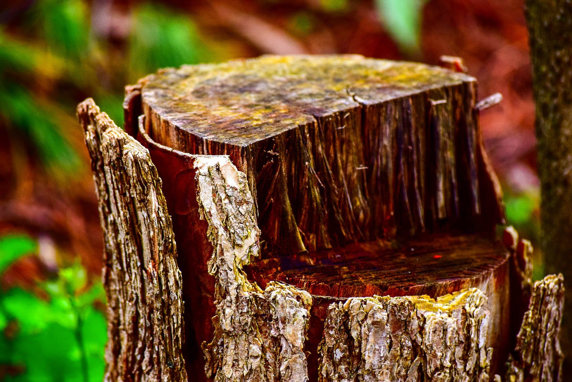 Tilt Shift Photo Of Log