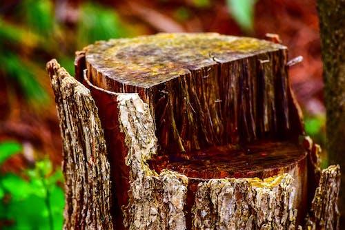 ağaç, ağaç kütüğü, kütük, tomruk içeren Ücretsiz stok fotoğraf