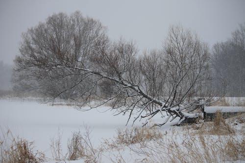 Ingyenes stockfotó hideg, hó, park, tél témában