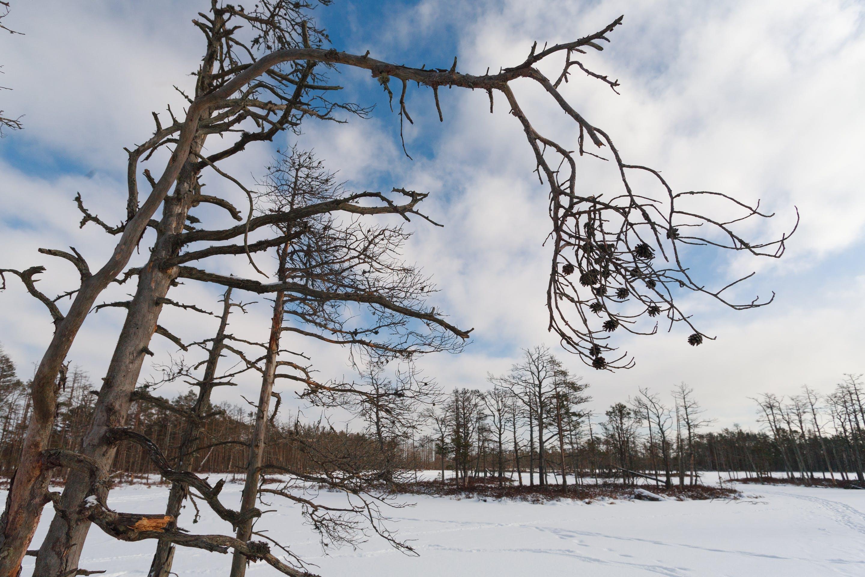 Kostenloses Stock Foto zu blaue himmel, eis, kiefer, landschaft