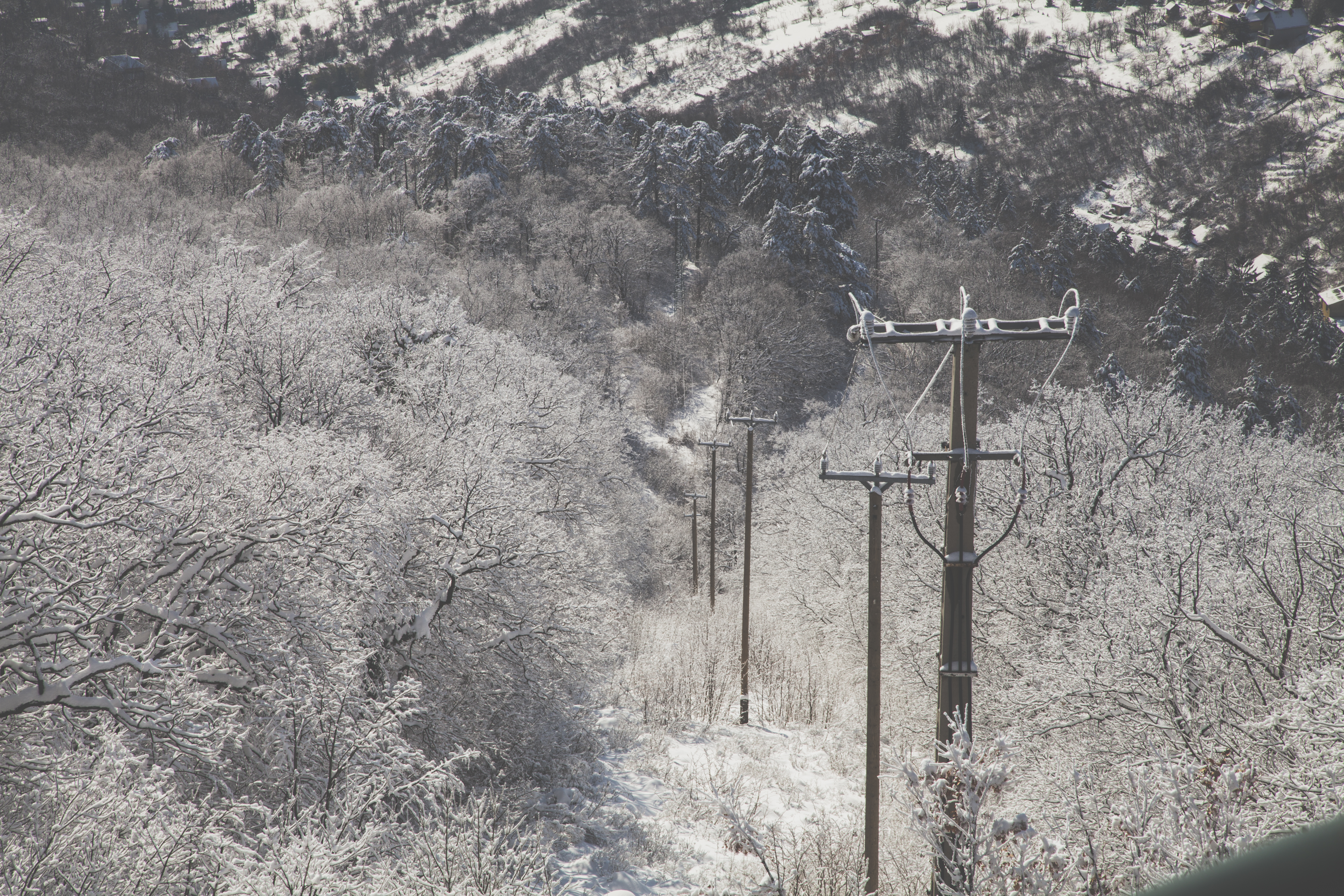 Photo of Electricity Transmission Surrounded With Trees
