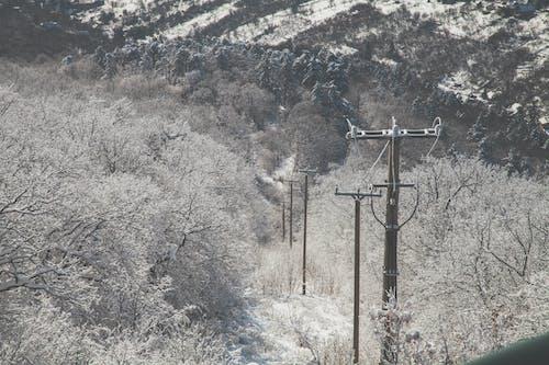 Immagine gratuita di alberi, freddo, inverno, linee elettriche