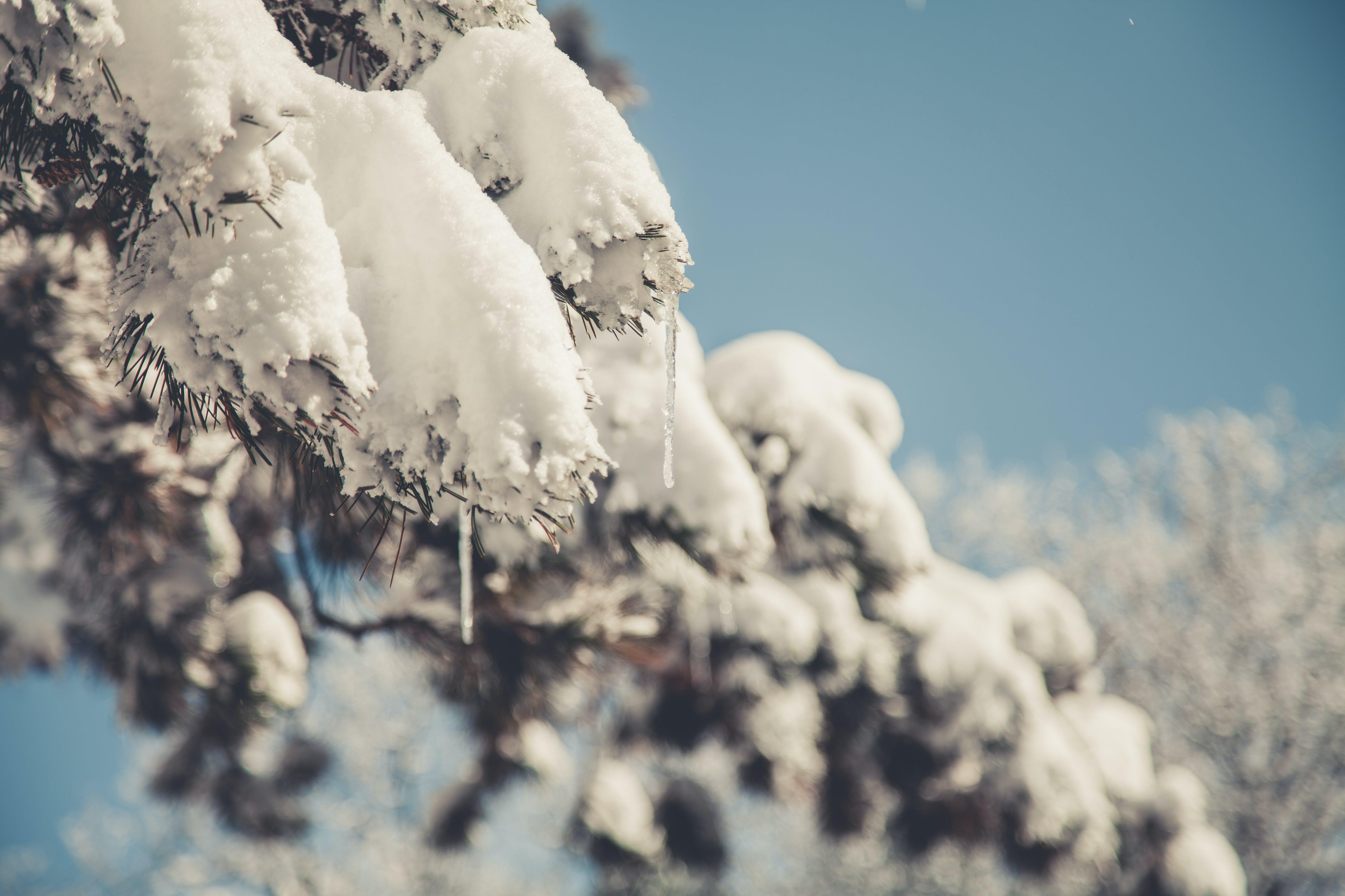 Free stock photo of cold, snow, winter, blur