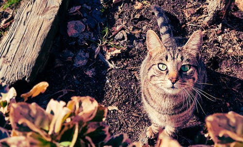 Brown and Gray Tabby Cat