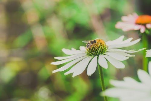 Fotos de stock gratuitas de abeja, al aire libre, bokeh
