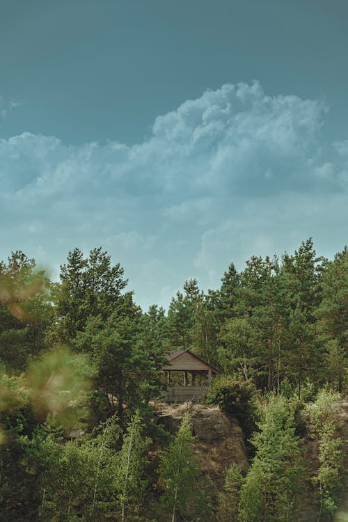A Wooden Cottage in The Middle of The  Forest