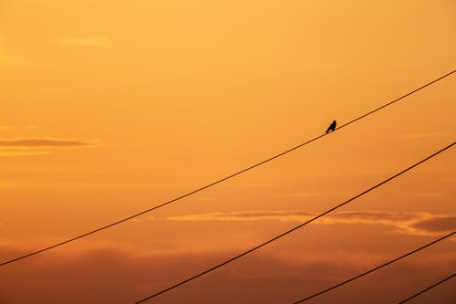 Silhouette of a Bird Perched on a Power Line