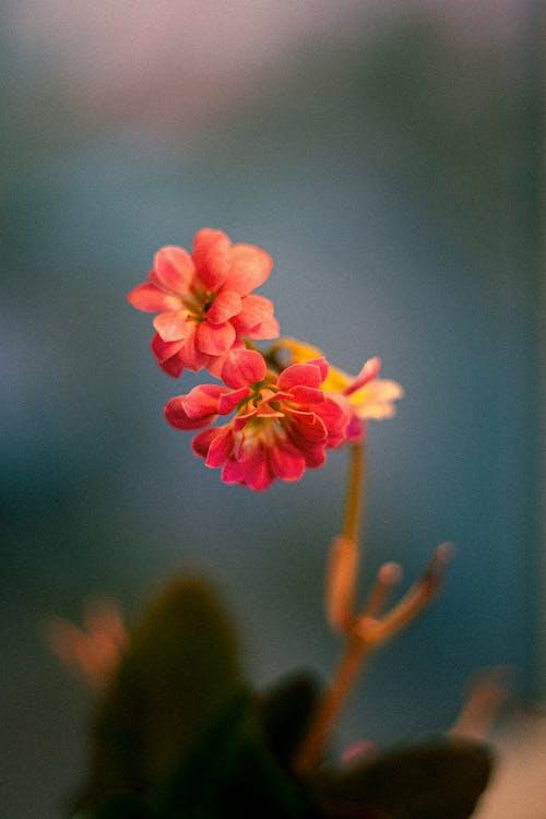 Fotobanka sbezplatnými fotkami na tému flóra, hĺbka ostrosti, jemný