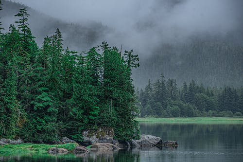 Photos gratuites de arbres de conifères, bord de lac, brouillard