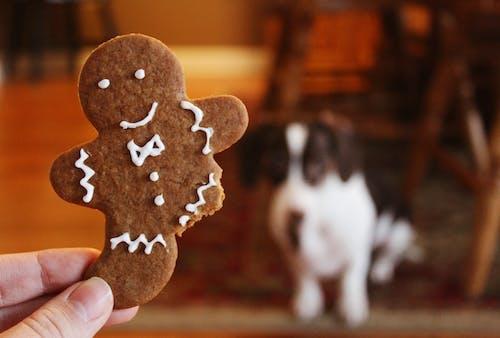 Kostenloses Stock Foto zu brot, cookie, essen, fokus