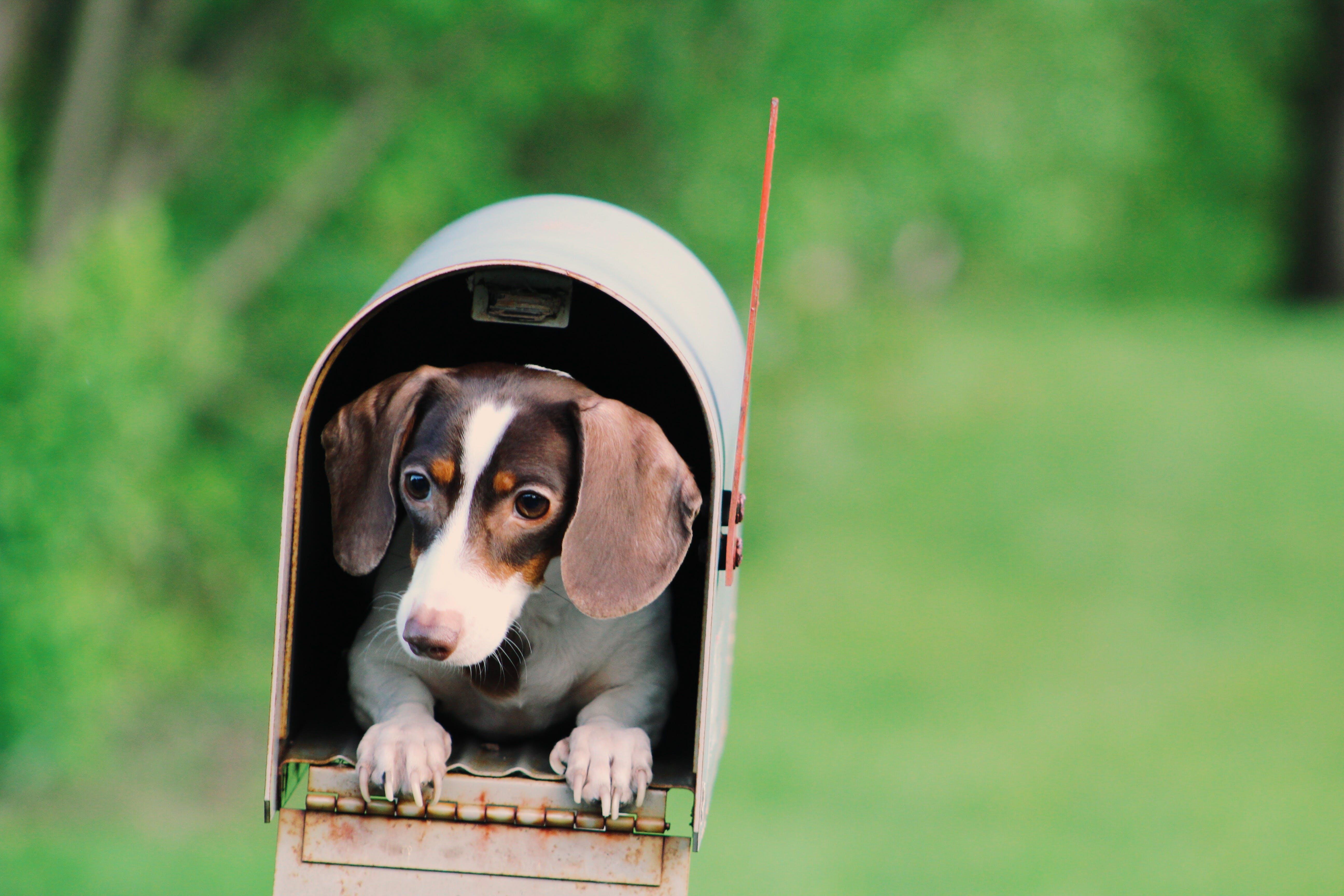 Darmowe zdjęcie z galerii z pies, psi, skrzynka pocztowa, ssak