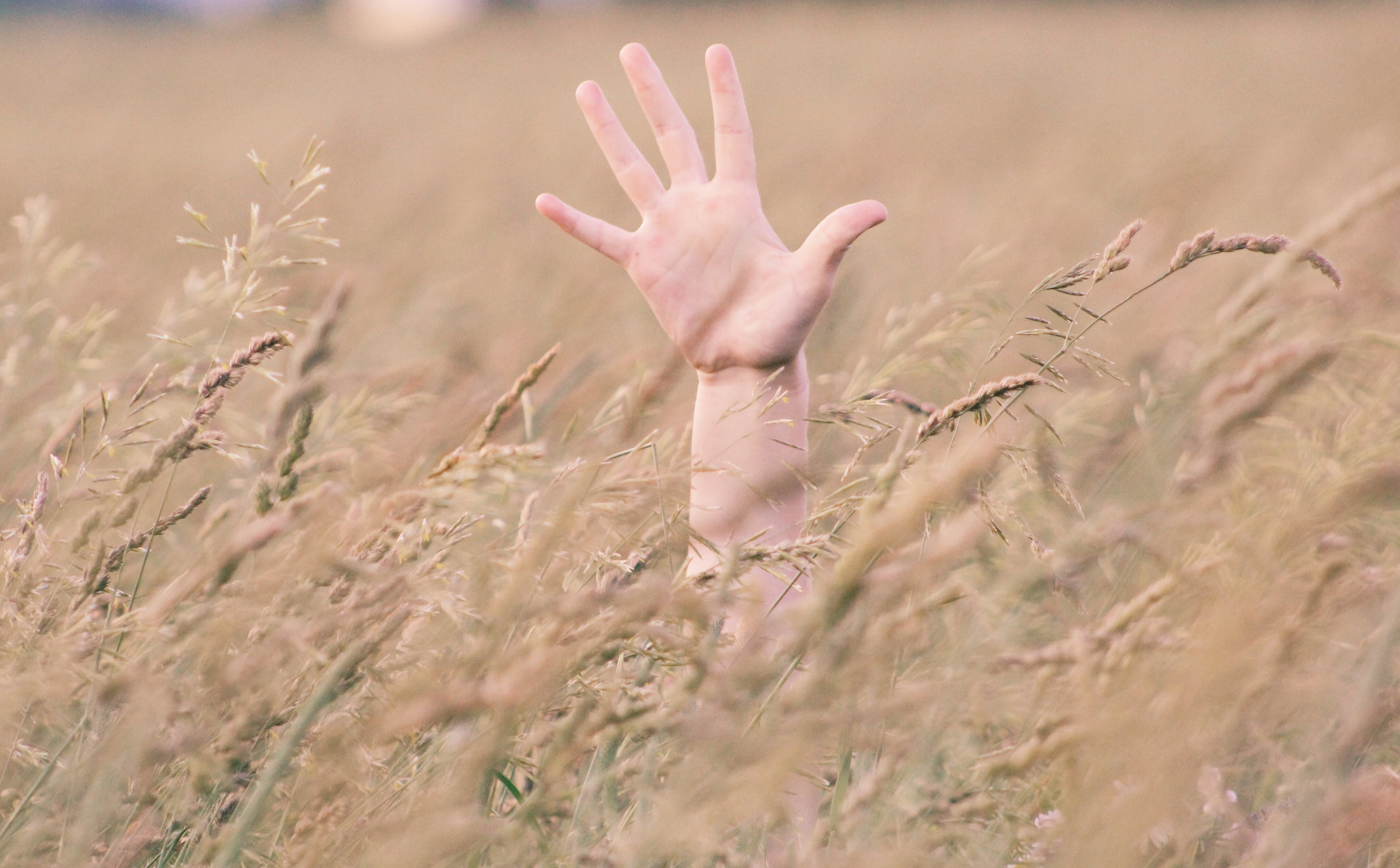 Photo of Person's Right Hand in Field