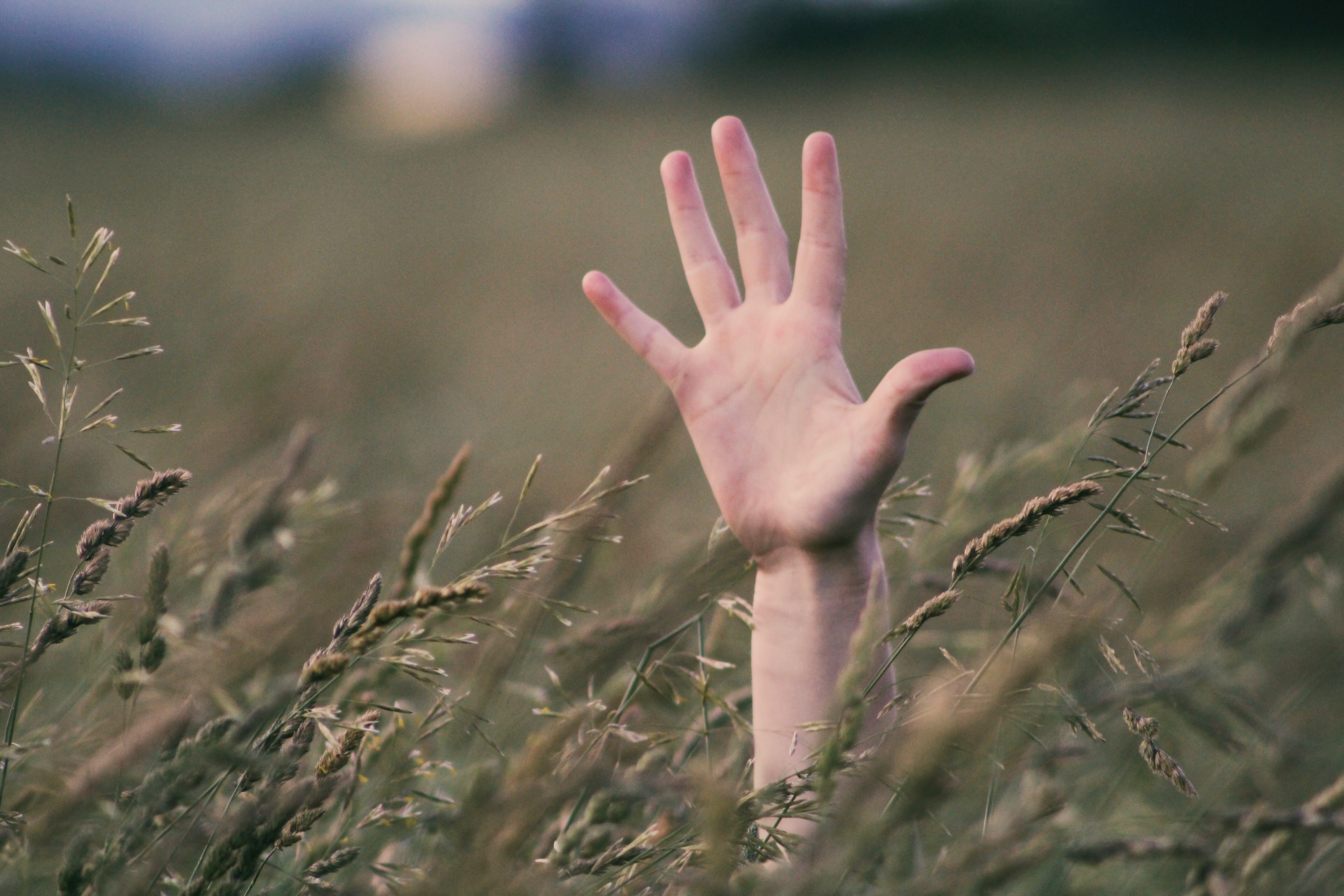 Darmowe zdjęcie z galerii z pole, pole uprawne, ręka, roślina