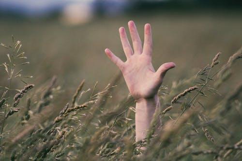 Immagine gratuita di campo, erba, impianto, mano