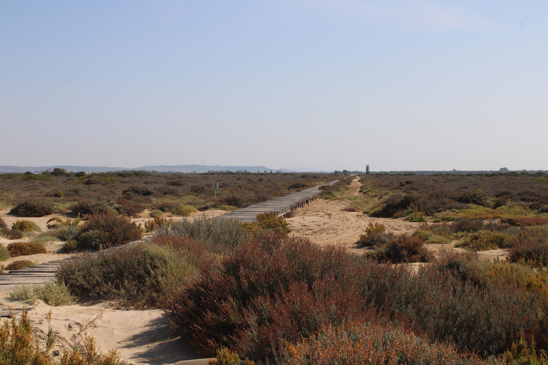 camino de vuelta hacia la torre mirador del parque