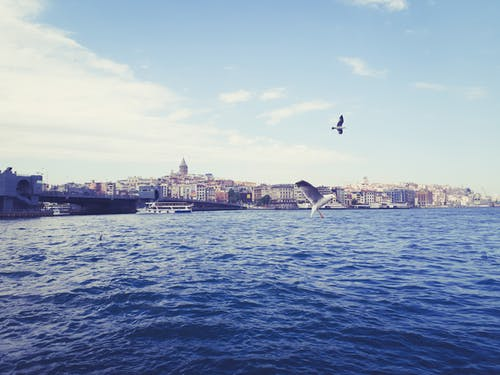 Безкоштовне стокове фото на тему «індичка, місто, морський птах, Середземне море»