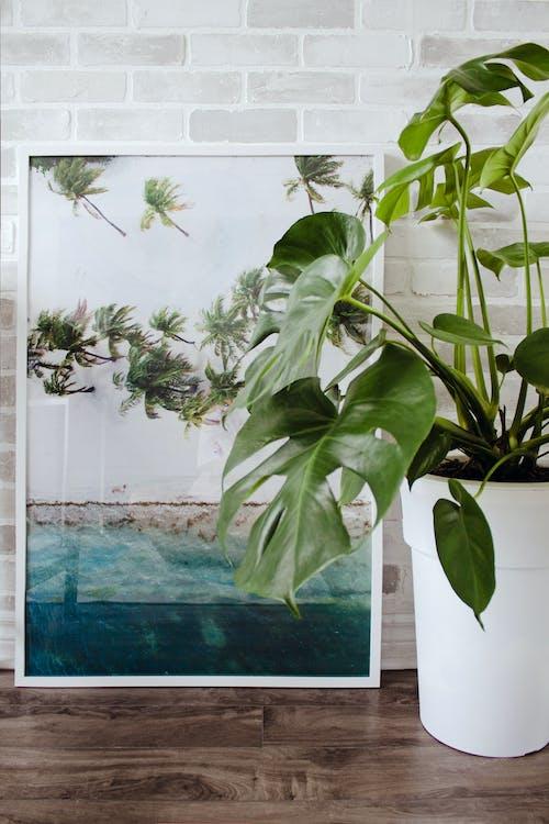 Ingyenes stockfotó belsőépítészet, beltéri növények, cserepes növény, cserepes növények témában