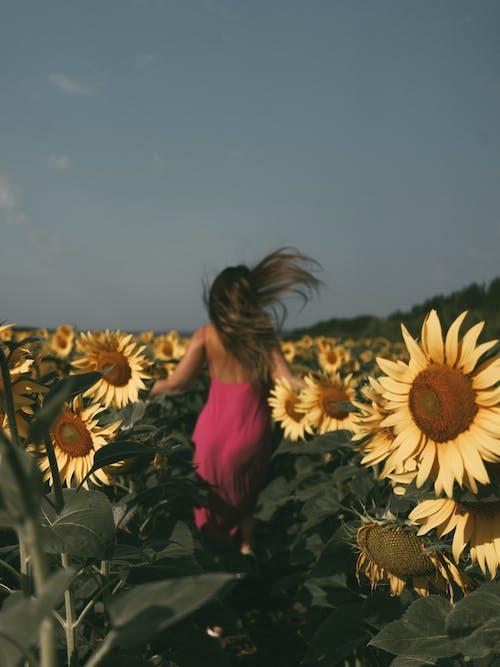 Woman in Pink Dress Running on Sunflower Field