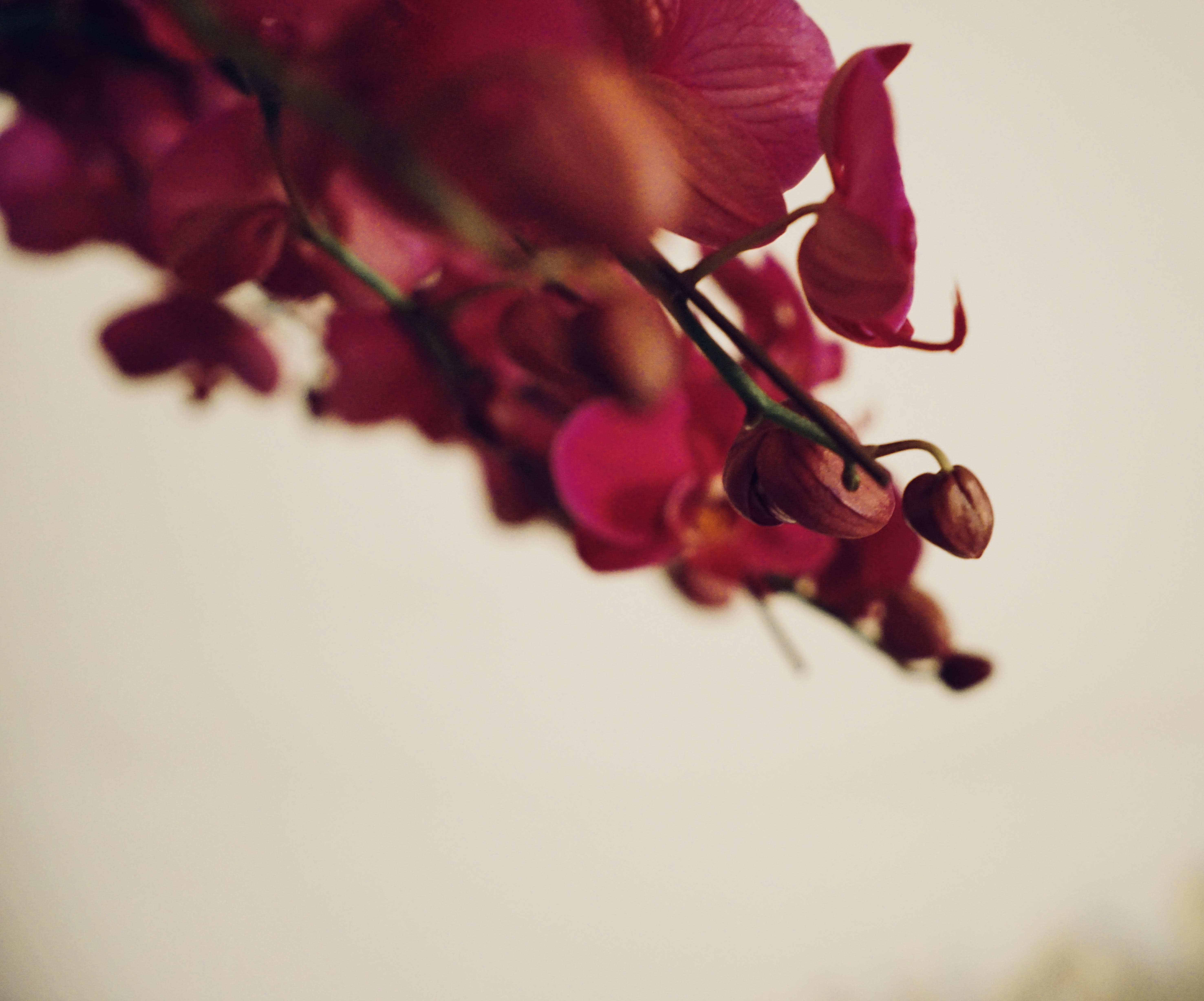 Free stock photo of flower bouquet, red