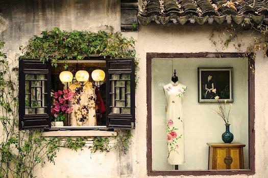 Free stock photo of 植物, 窗户, 风景, 街拍