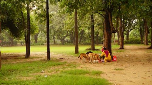 Free stock photo of care, dog, feeding