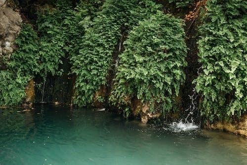 Photos gratuites de arbres, cascades, chutes d'eau
