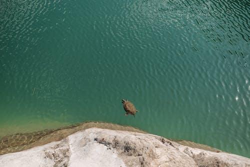 Ilmainen kuvapankkikuva tunnisteilla eläin, helpotus, hiekkaranta