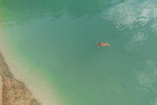 Ilmainen kuvapankkikuva tunnisteilla helpotus, hiekkaranta, järvi