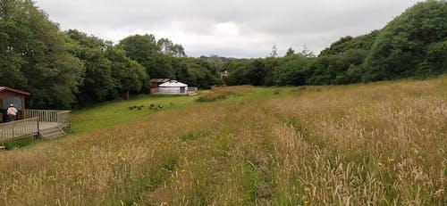 Free stock photo of field, outdoors, yurt