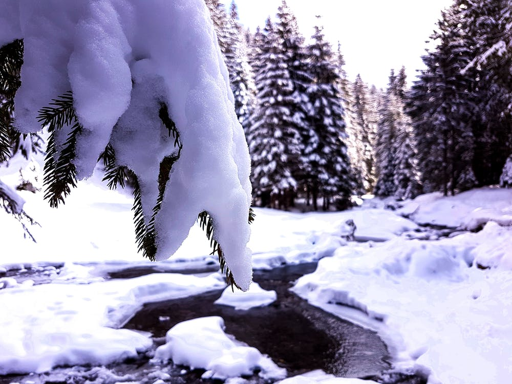 abete, alberi, congelando