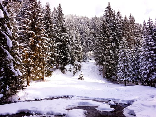 คลังภาพถ่ายฟรี ของ การแข่งขันกลางแจ้ง, การแข่งขันบนมือถือ, ต้นไม้, ฤดูหนาว