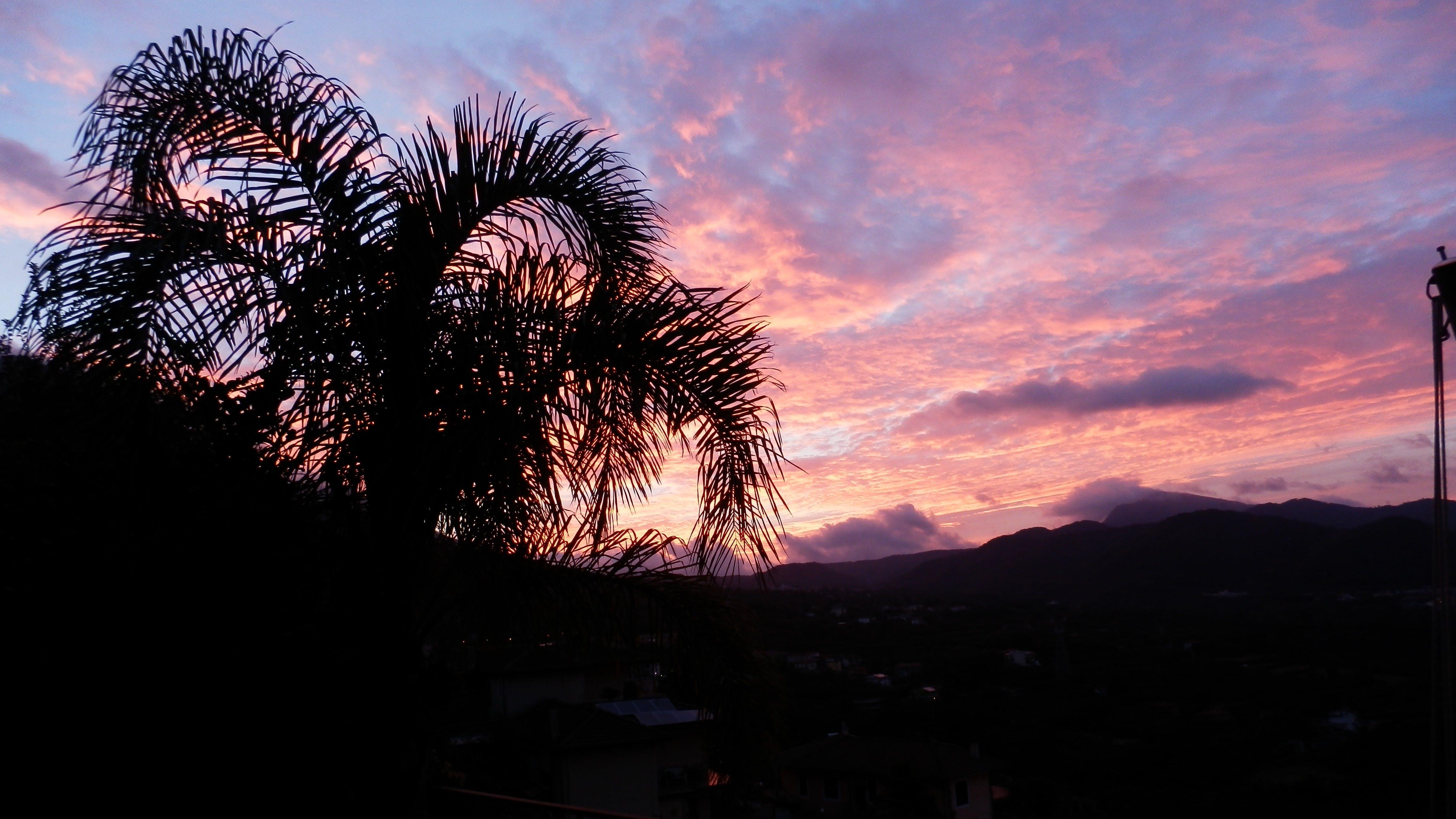 Free stock photo of palm tree, panoramic view, sunset